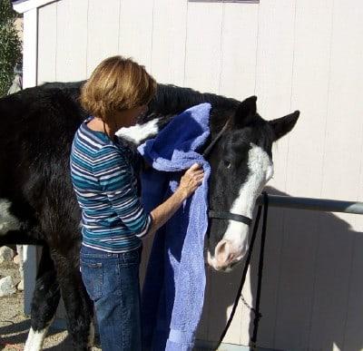 WARHorses_womangroomingblackhorse