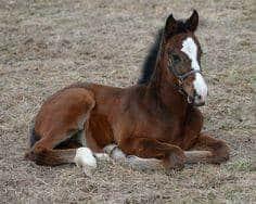 WARHorses_UnionRags_foal