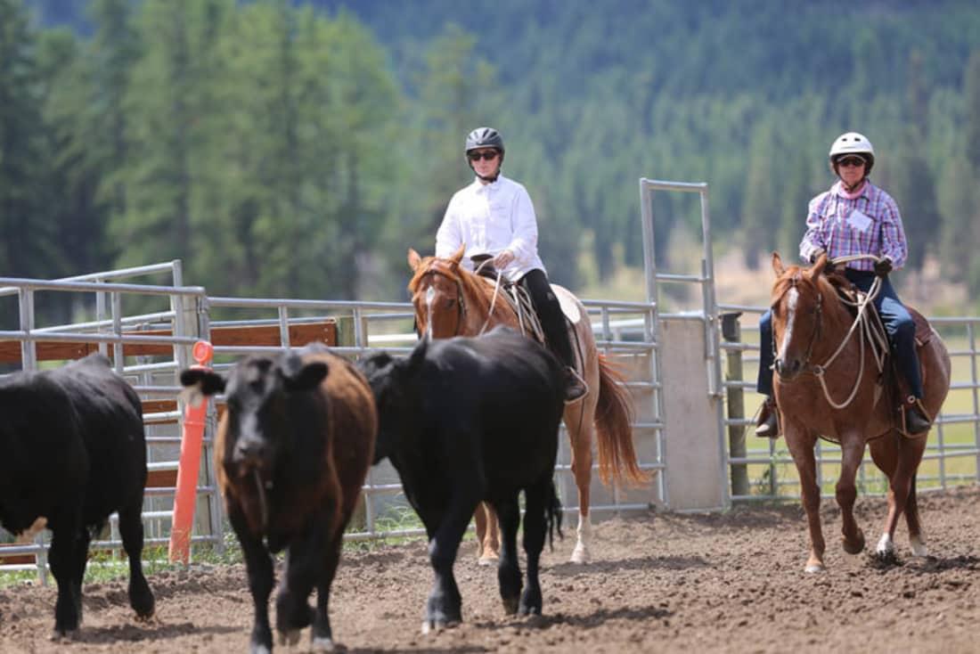 WARHorses_Our winning ride, Buck Brannaman Montana 2016