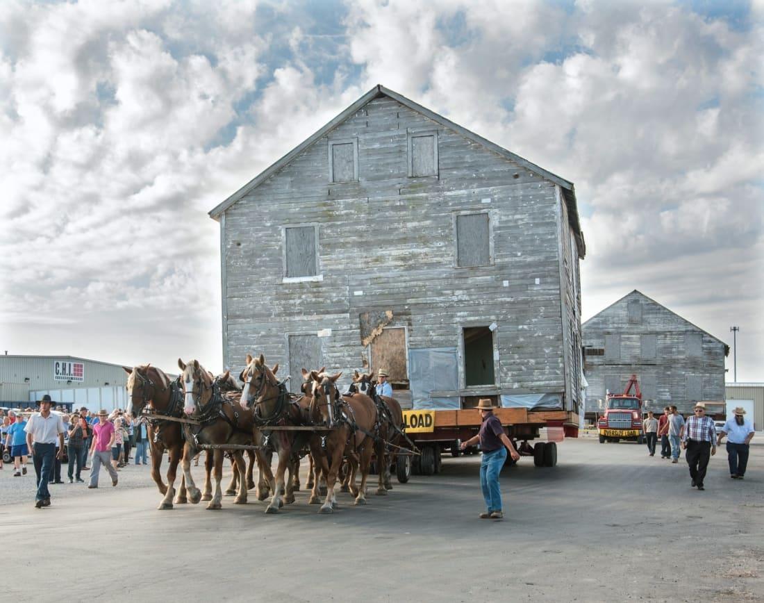 WARHorses_Belgian_Amish House