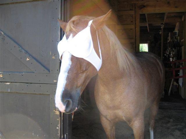 warhorses_lolahobby_bra