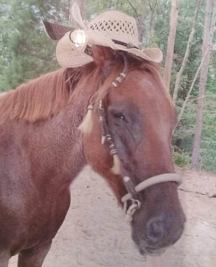warhorses_lola_red