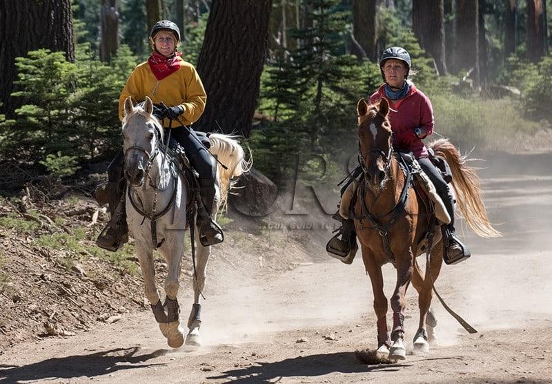 warhorses_merc_amos_seniorhorses