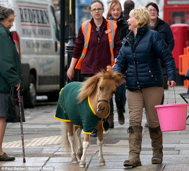 WARHorses_mrp_therapy_horse