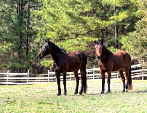 WARHorses' Horses Stolen –Help Find River & Yago