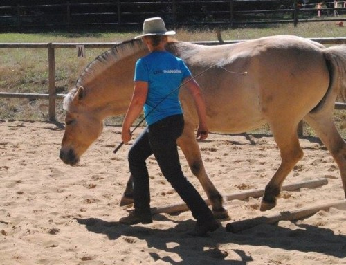 Liberty Training – Improve Your Relationship with Your Horse