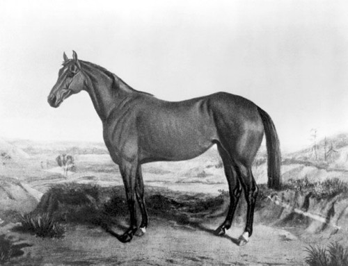 SHE won the first Belmont Stakes – Ruthless