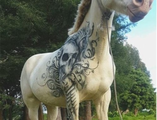 Not Just for Identification – Horse Tattoos