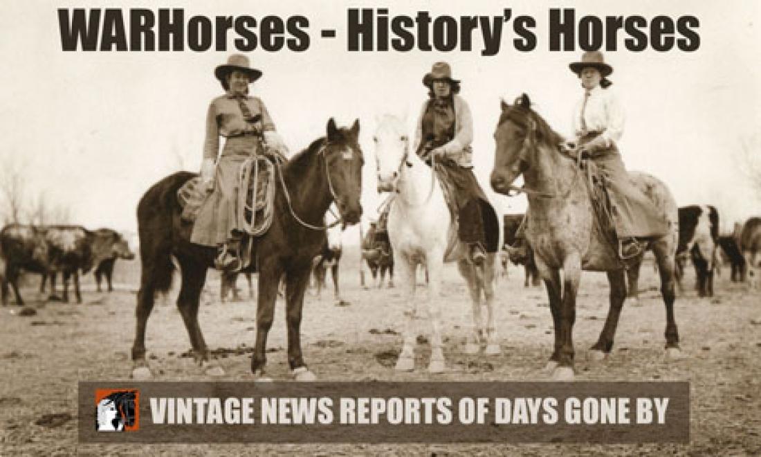 WARHorses Historys Horses