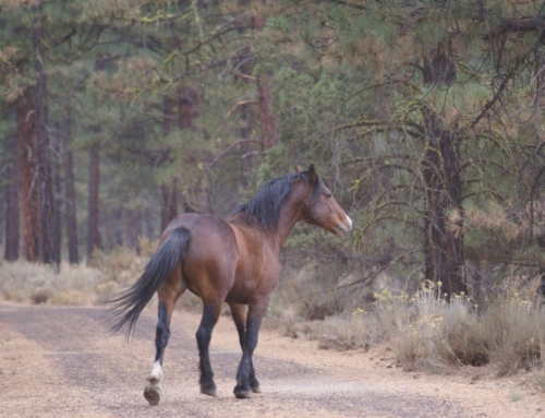 Wild Horses Win in Court