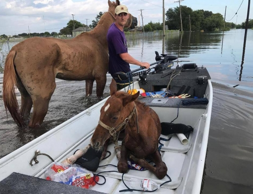 They Survived Harvey but Texas Horses Still Need Help