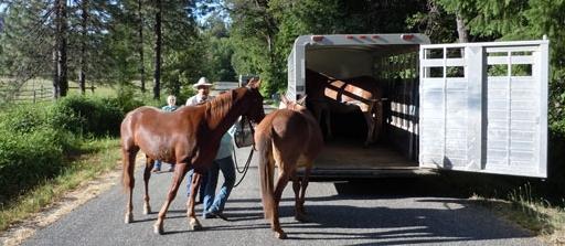 Loading Horses