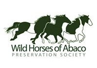 WARHorses_Wild Horses of Abaco Preservation Society