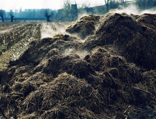 First Horse Show Powered by Manure