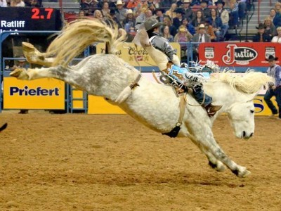 Virgil champion Bucking Horse