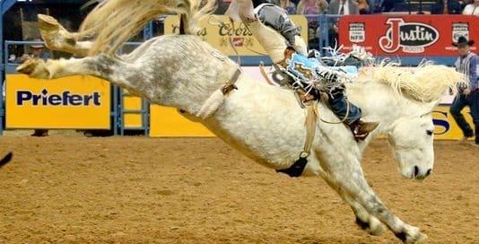 Virgil champion Bucking Horse