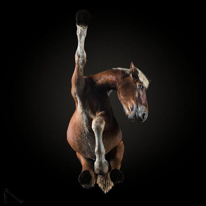 Under Horse