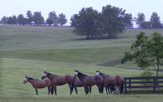 Foal Patrol