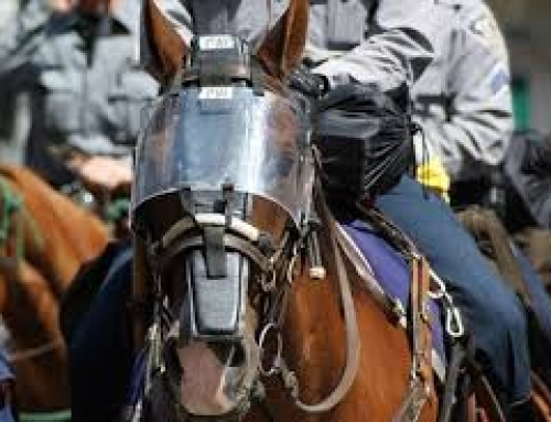 Protection Pending for Colorado's Police Horses