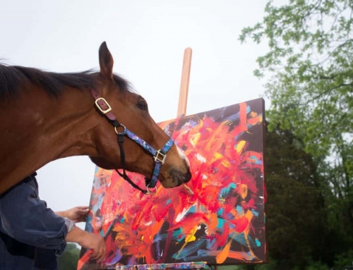 Metro Meteor the Acclaimed Painting Horse Retires