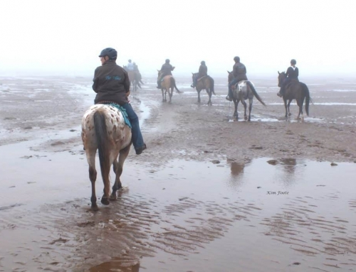 """""""The Fillies"""" of Nova Scotia – Horse Lovers, Trail Riders and Lifelong Friends"""