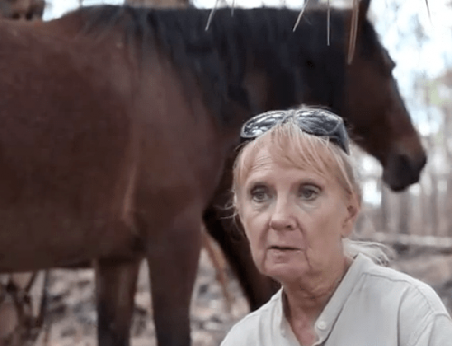 She is Determined to Bring These Horses Back from the Dead