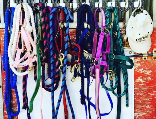 WARHorses Easy Guide to Choosing the Right Colors for You and Your Horse