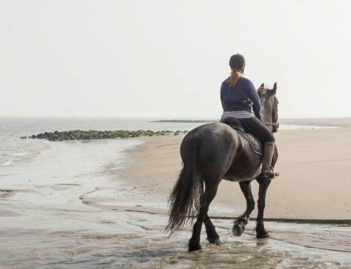 A WARHorses Online Workshop Featuring Riding for Women