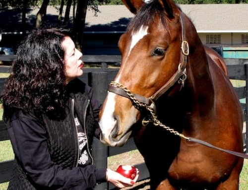 WARHorses' Interview with Jane Heart Jewelry