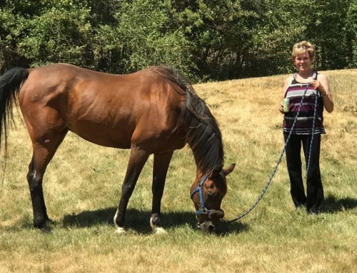WARHorses' Interview with endurance rider Joyce Sousa and LV Integrity