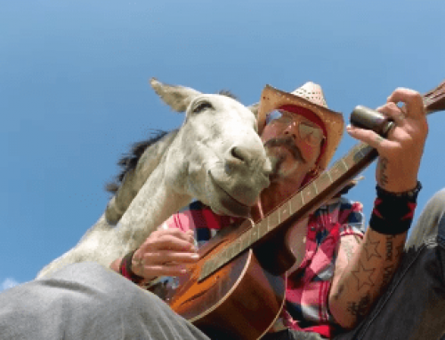 WARHorses' Video Favs – Donkey Love