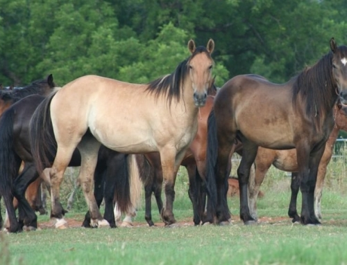BLM Will Pay You To Adopt A Wild Horse or Burro