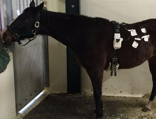 100 Feet Untraveled – Your Horses' Gastrointestinal System