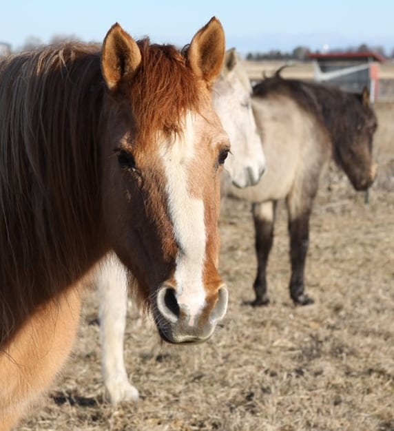 Bonded horses helped by Doris Day
