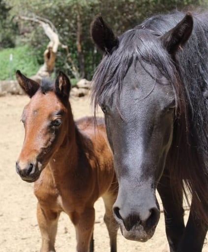 Mare and foal helped by Doris Day