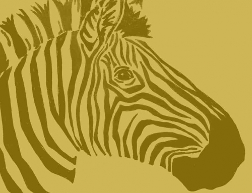 Rare Golden Zebra Photographed In The Wild