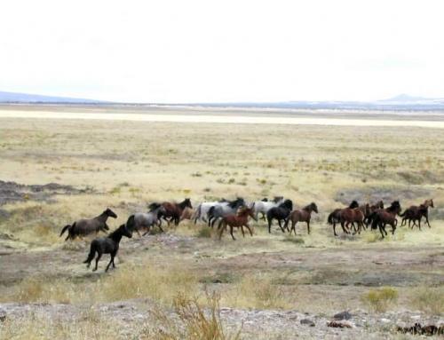 Wild Horses & Burros Handed a Reprieve