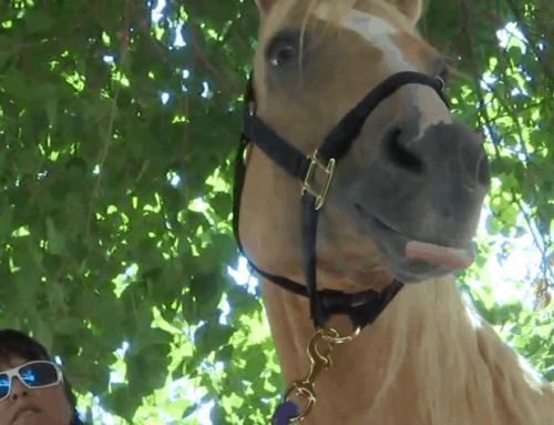 Horse Owner Told Her Horse Was Dead