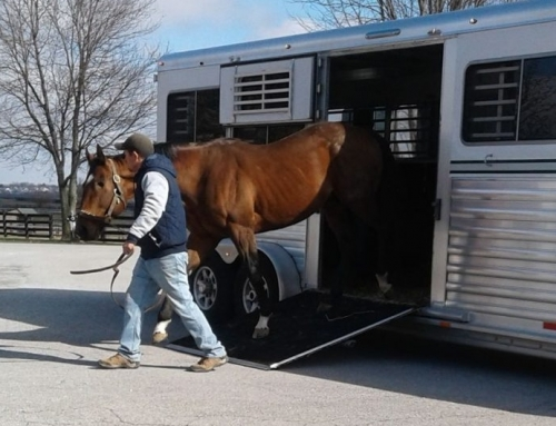 One-Eyed Race Horse Retired to Old Friends