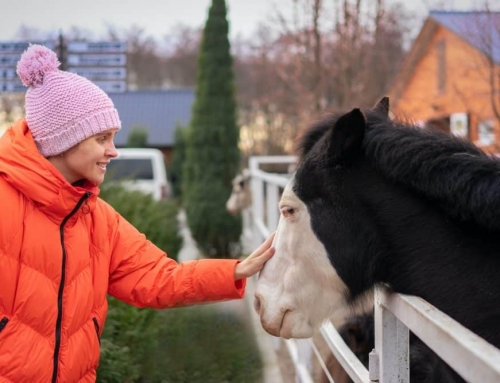 Five Pandemic Horse Tales To Make Your Heart Soar