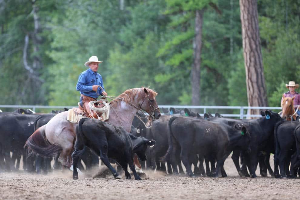 WARHorses_Buck Brannaman, Montana 2016