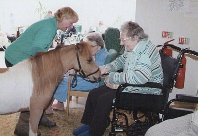 WARHorses_therapy_horse