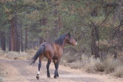 WARHorses Devils Garden Wild Horse