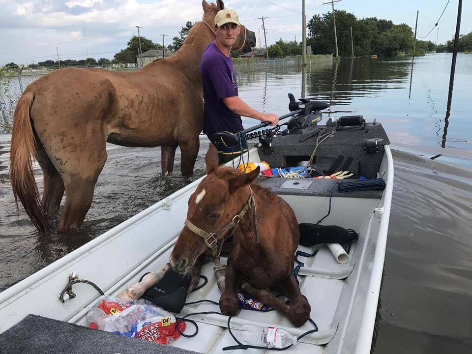 Hurricane Harvey Horses