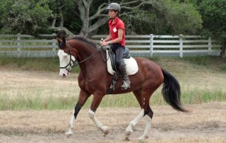 WARHorses Women of Age Riding Horses