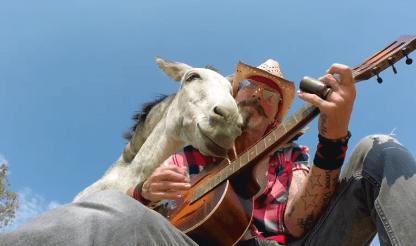 WARHorses' Video Favs – Donkey Love