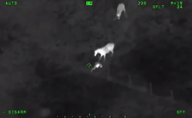 Horse Joins Sheriffs in Hot Pursuit