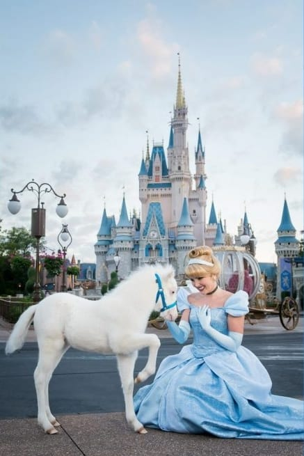 Disney Welcomes A Special Foal