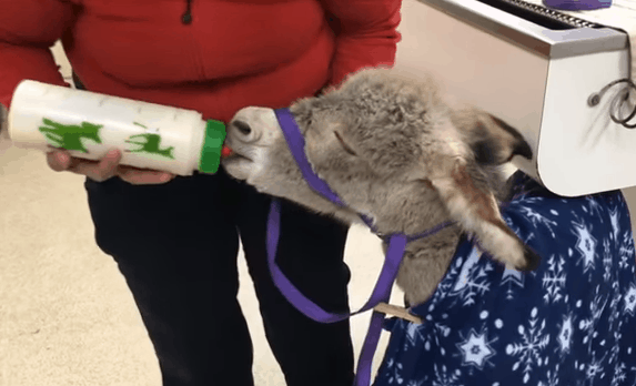 Retiree's Good Deed Saves Young Donkey's Life