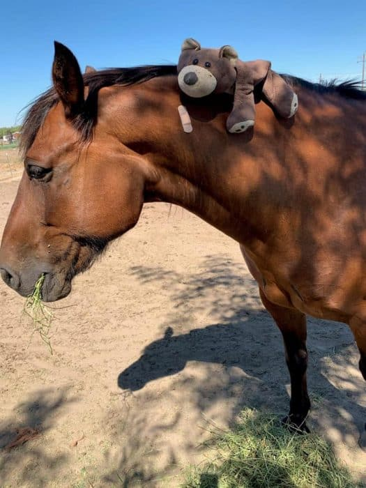 Police Horse Punched During Brawl